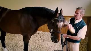 Фрэнкел   самая дорогая лошадь в истории 200 000 000 $