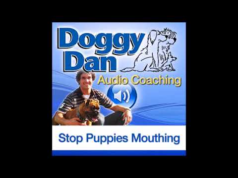 how to stop puppy mouthing
