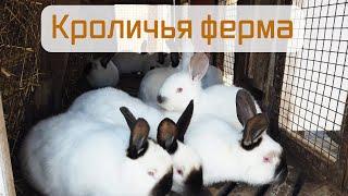Кролиководство. Мои клетки для кроликов.