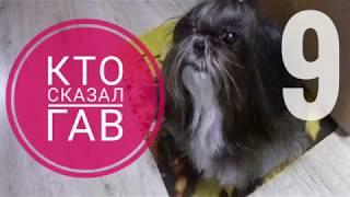 9 / Чистая собака - довольная собака :)