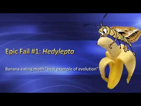 "Failures of Evolution: Banana Moth is ""Best Example of Evolution""?"