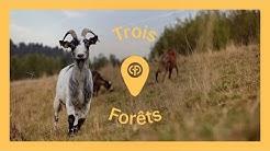 Découvrez Le Domaine Des Trois Forêts en France   Center Parcs