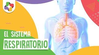 El sistema respiratorio - Biología - Ed...