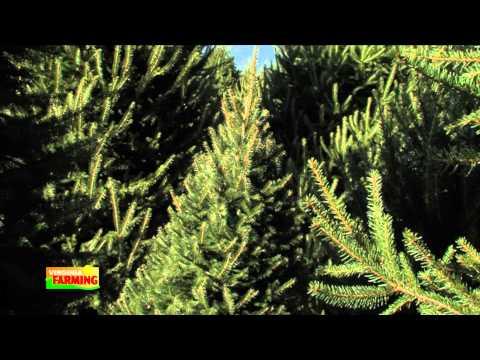 Virginia Christmas Trees with Grower Dave Thomas