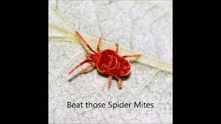 How to get rid of Red Spider Mites
