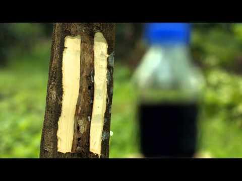 Asia Plantation Capital - Corporate Video 2015