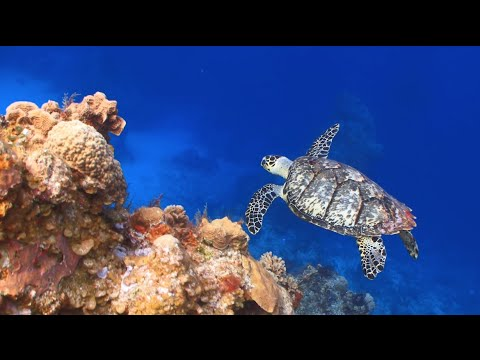 Saving our ecologically important coral reefs - Marine ecologist Paul Sikkel
