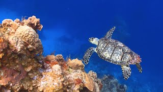 Saving our ecologically important coral reefs - Marine ecologist Paul Sikkel thumbnail