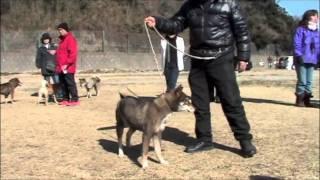 日保会員有志による日本犬鑑賞会が神奈川県逗子市にて開催されました。...