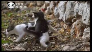 Жизнь кошек, видео