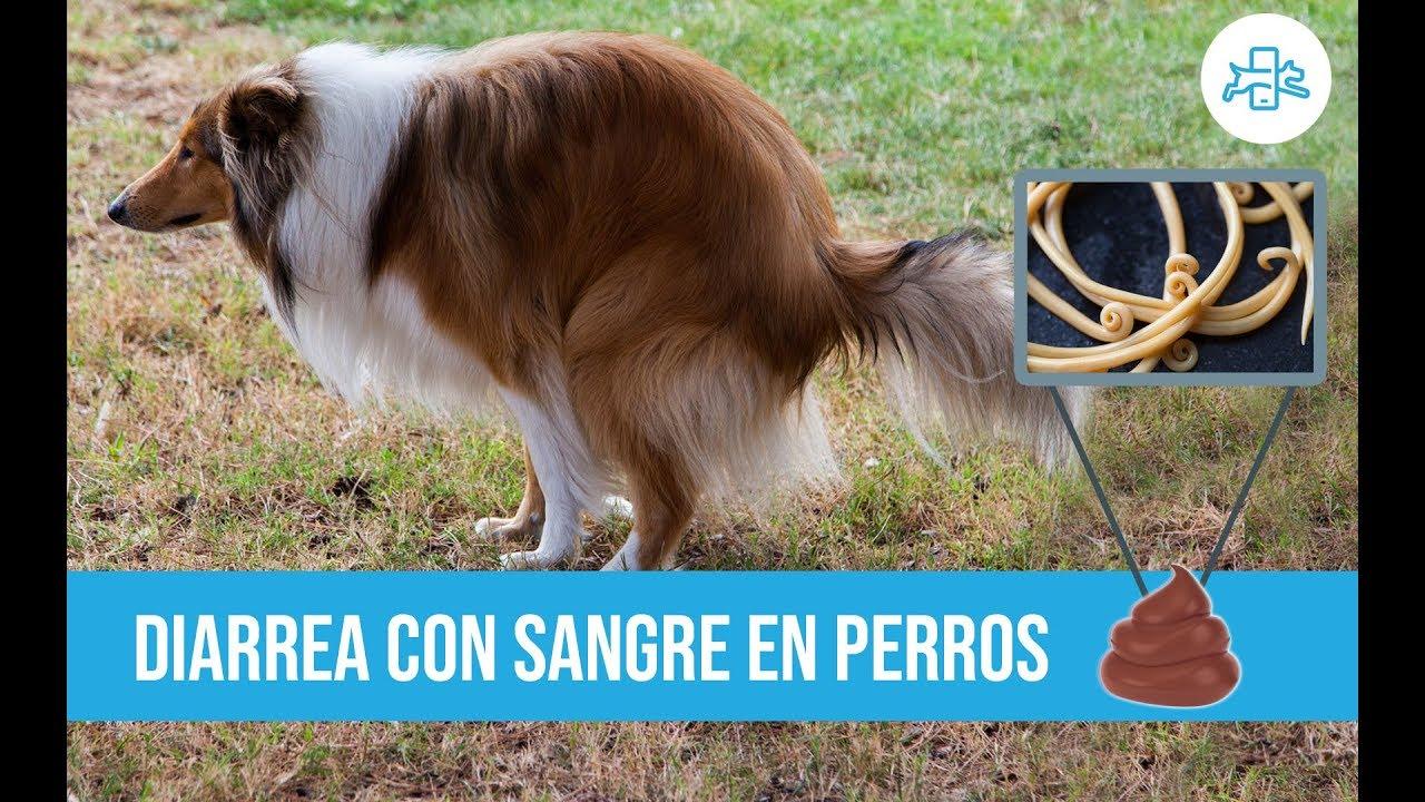 matando parásitos en perros naturalmente