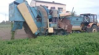 Wykopki ziemniaków 2019 /ANNA & URSUS W AKCJI / !!!