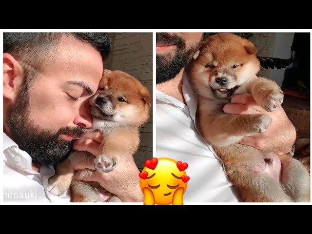 Hugging my puppy too long Ep2 - Shiba Inu puppies (with captions)