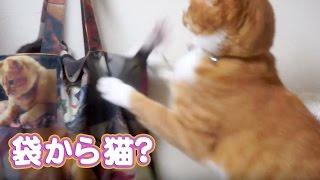 おもしろ 笑える 爆笑 猫動画 ! ビックリ箱じゃなくてビックリ袋(*^^*)...
