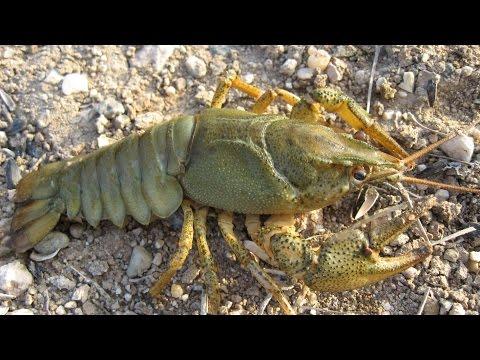 Видео Сетка для ловли раков