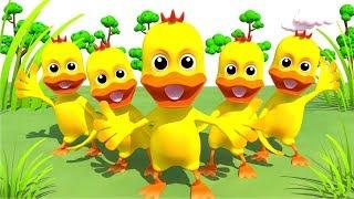 Download Anak bebek lucu berenang