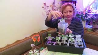 Посылка с китайского сайта Newchic. Для дачи и выращивания рассады.