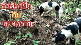 พาหมาไปล่าสัตว์ป่า ในดงไพร สิ่งที่ได้เกินคาด!!