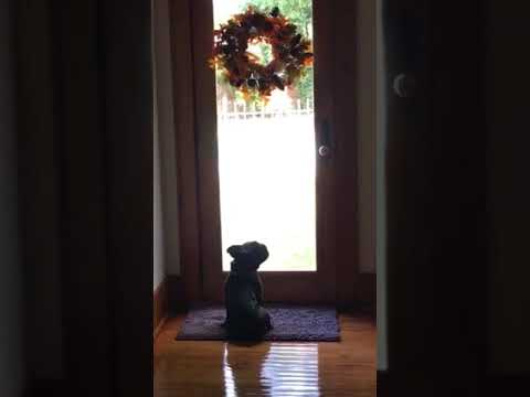 Frenchie hates wreath