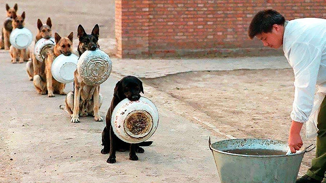 दुनिया में मौजूद 10 ऐसे होशियार जानवर जिन्हें देखने के लिए नसीब लगता है , देखकर भी यकींन नहीं होगा