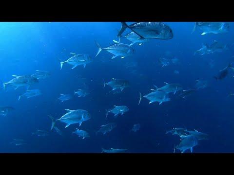 우리가 다이빙을 해야하는이유!?Why Do I Have To Dive?