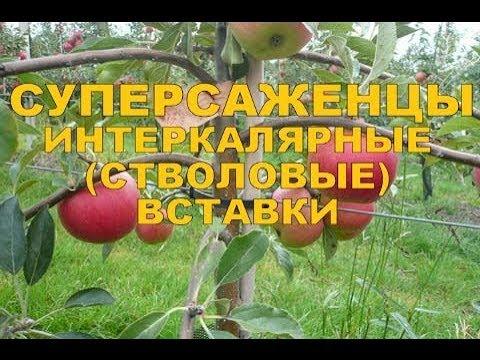 Первый Санкт-Петербургскийгосударственный медицинскийуниверситет им. акад. И.П. Павлова