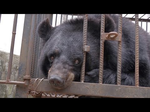 Pet puppy turns out to be endangered Chinese bear