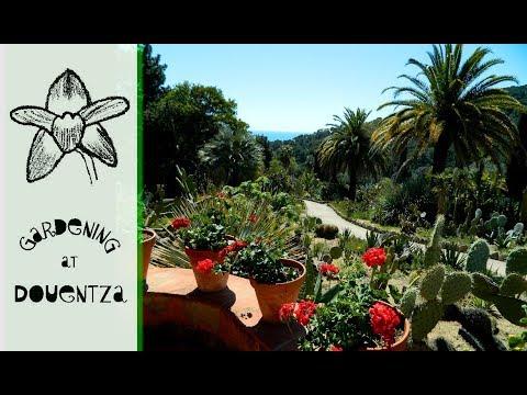 Amazing Cactus Garden - Pinya de Rosa, Spain