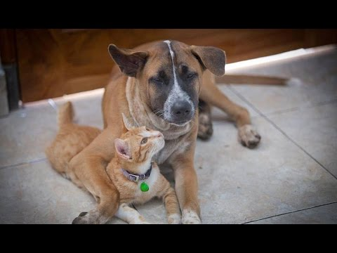 Amazing Cat and Dog Friendship, Cat and Dog Playing together. Travis and Yoda