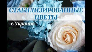 Стабилизированные цветы и мох: Etoile Flora Украина(, 2016-08-08T17:53:26.000Z)