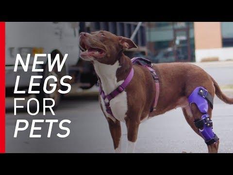 """Bionic Vet"" Makes Prosthetics for Pets"