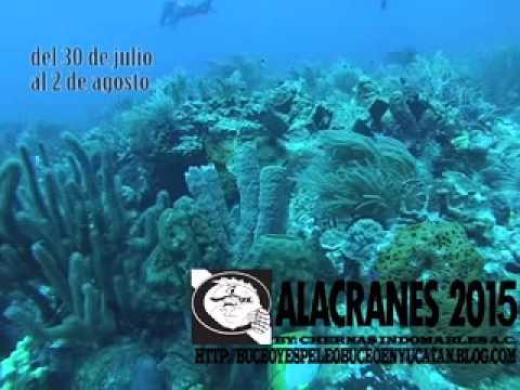 Conoce Arrecife Alacranes