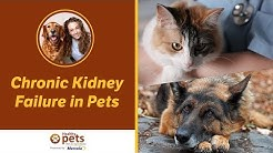 hqdefault - Flea Treatments And Chronic Kidney Failure In Pets