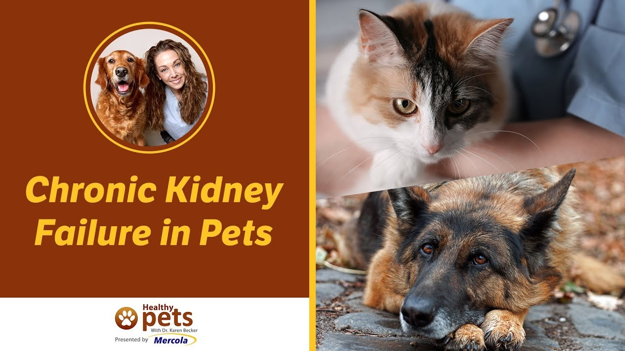Dr Becker Discusses Chronic Kidney Failure In Pets Youtube