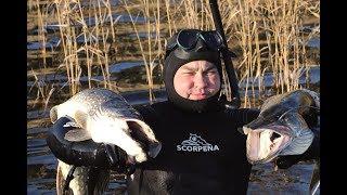 ПОДВОДНАЯ ОХОТА В ФИНЛЯНДИИ Аландские острава ДИАЛОГИ С ПОДВОХАМИ Wild Fishing Finland
