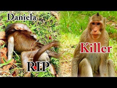 Awful News.. RIP Poor Baby Daniela | Full Video Action Of Baby Daniela Was Killing