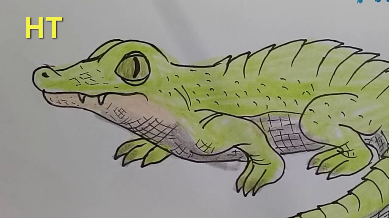 Aninimal Book: How to draw a crocodile cute sep by step - Draw cute ...