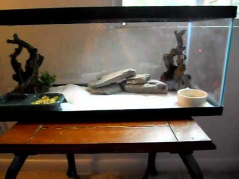 How To Setup A Bearded Dragon Tank Youtube