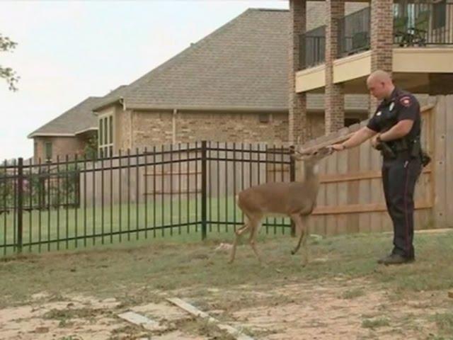 Policajac jelenu spasio život, a on mu se na tome zahvalio
