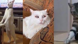 Những chú mèo KINH DỊ nhất Thế Giới . Yếu tim không nên xem =))