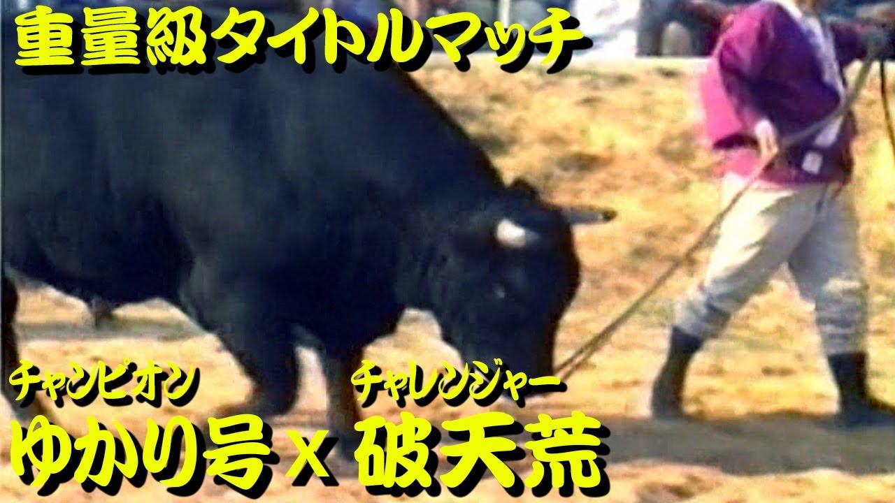 ゆかり号x破天荒(重量級タイトルマッチ) 1991.11.10 【沖縄闘牛】
