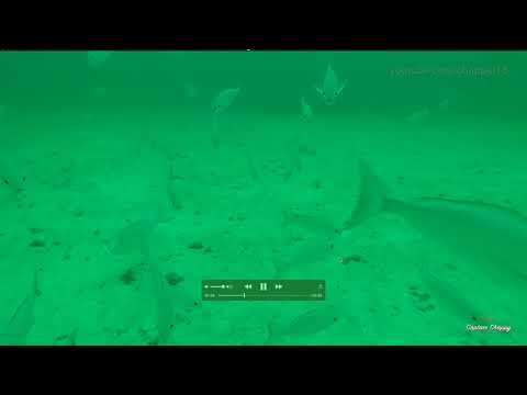Found New 170-feet Deep Red Snapper And Gag Bottom!