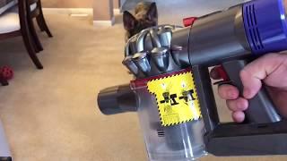 German shepherd shedding: Dyson V8 Animal Cord Free Vacuum