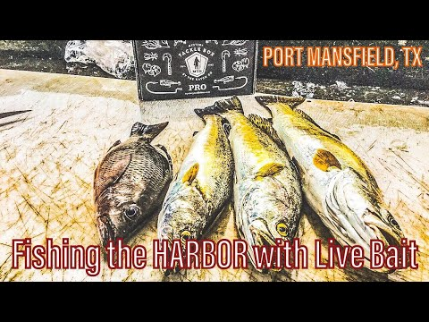 Fishing The HARBOR With Live Bait | Port Mansfield, TX