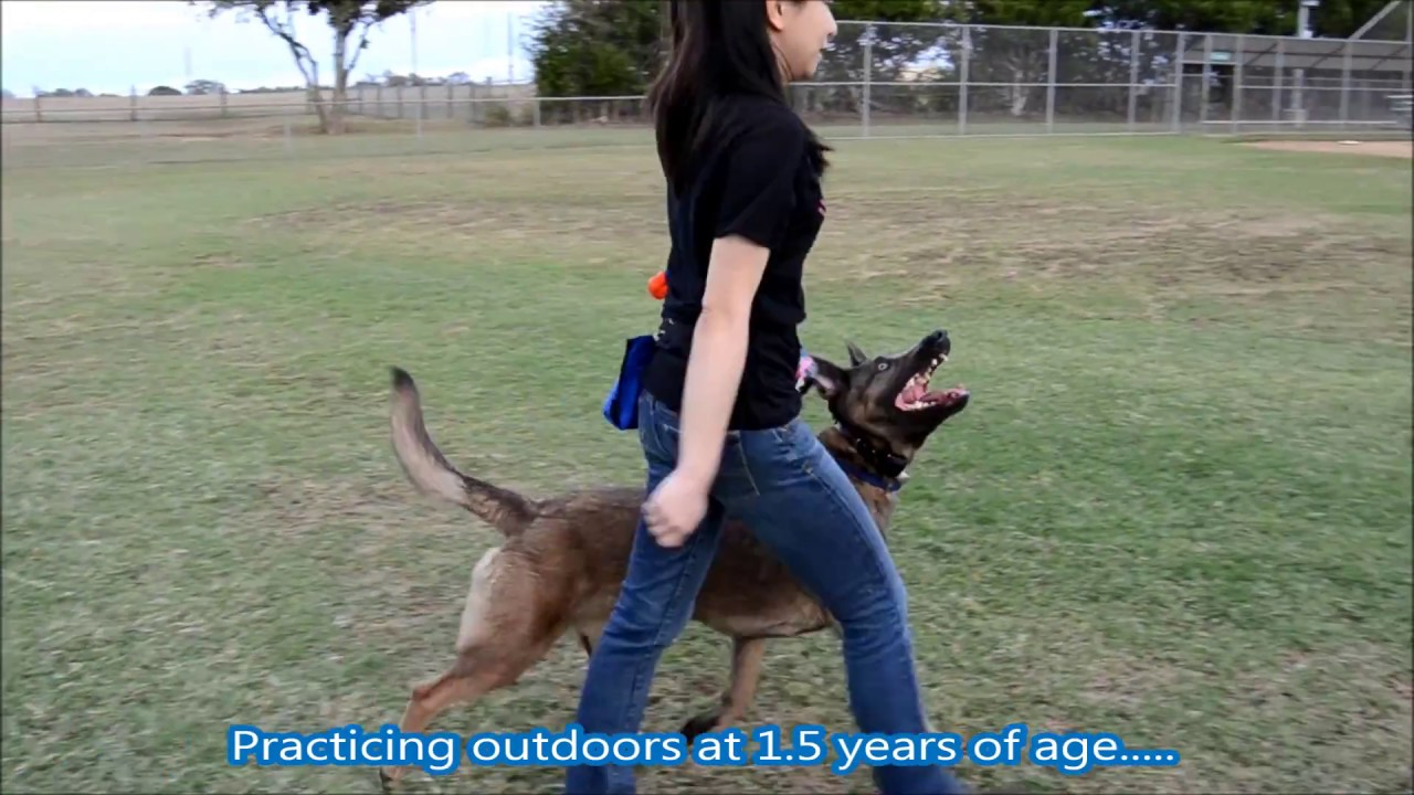 how to train your dog how to heel