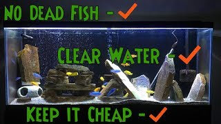 Beginner Fish Keeping Tips - KNOW THIS FIRST!