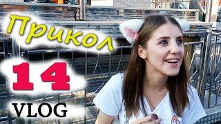 видео 17 мая в Киеве пройдет День собак «Счастливая лапа»