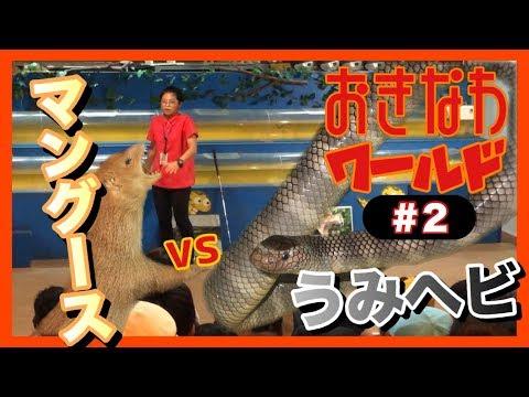 【沖縄観光旅行】沖縄ワールドのマングースVSエラブウミヘビ #2  【ハブ博物公園】