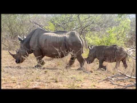 African Wildlife AIB Part 46