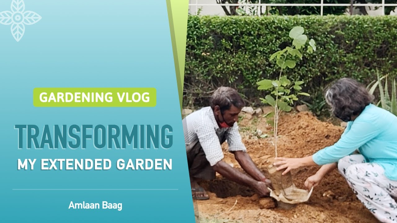 Gardening Vlog | Transforming My Extended Garden | मेरे नए पौधे - नया बगीचा